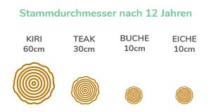 Grafik Stammdruchmesser nach 12 Jahren
