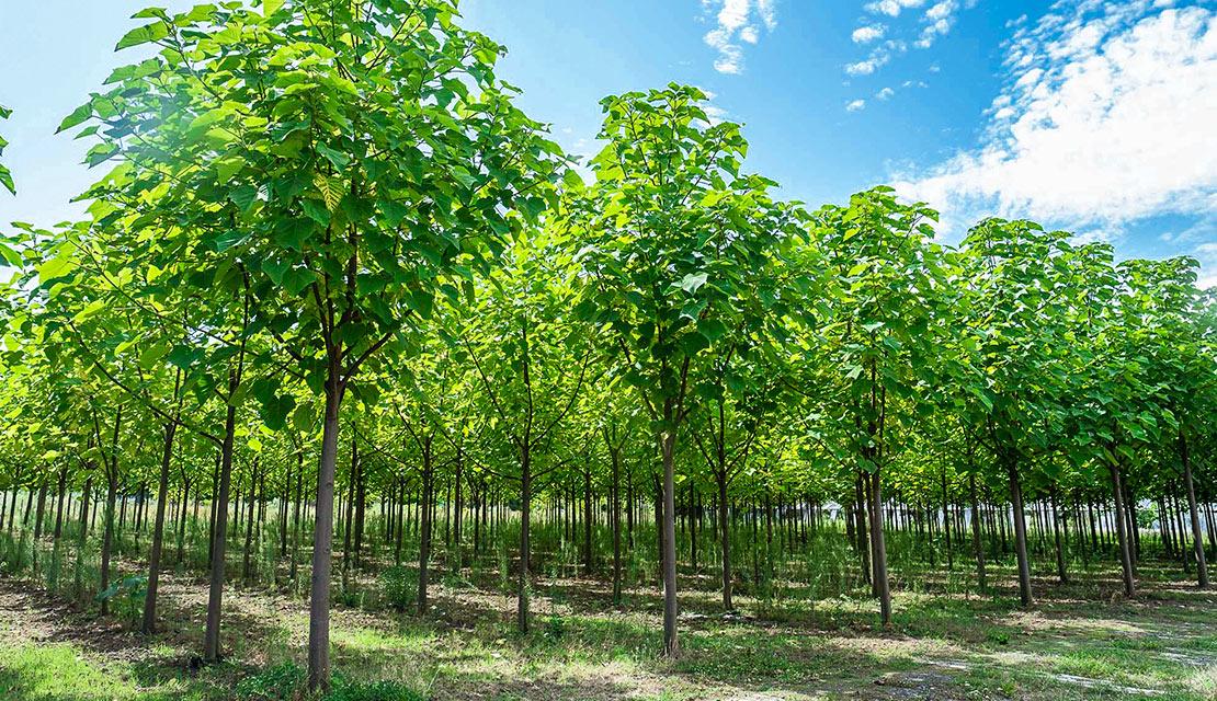 Wie nachhaltige Investitionen in Bäume das Klima schützen